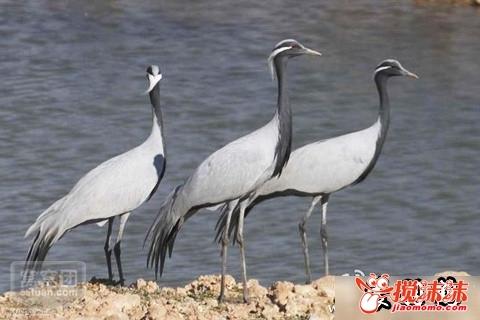 西宁野生动物园图片