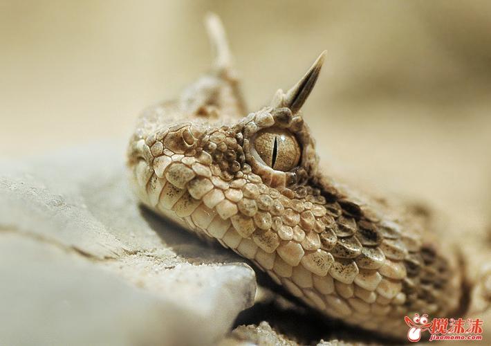 蝰蛇   车标   是   克莱斯勒汽车公司   道奇   部的产品高清图片